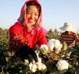 China plays a major role in global cotton market