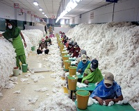 Cotton processing market to reach $72.6 billion by 2023