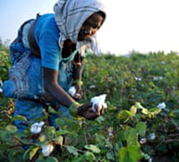 Sustainable cotton farming grows in India with new schemes