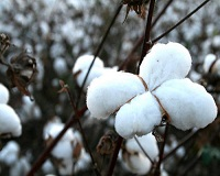 New technologies help cotton replace synthetics as new performance fabric