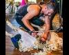 British Wool to sponsor 2019 Shearing & Handling World Championships